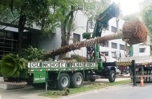Remoções, Transportes e Plantio de Arvores!!!